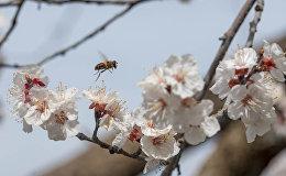 Весна в селе Джанфида, Армавир