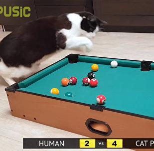 Бильярд: кошка против человека