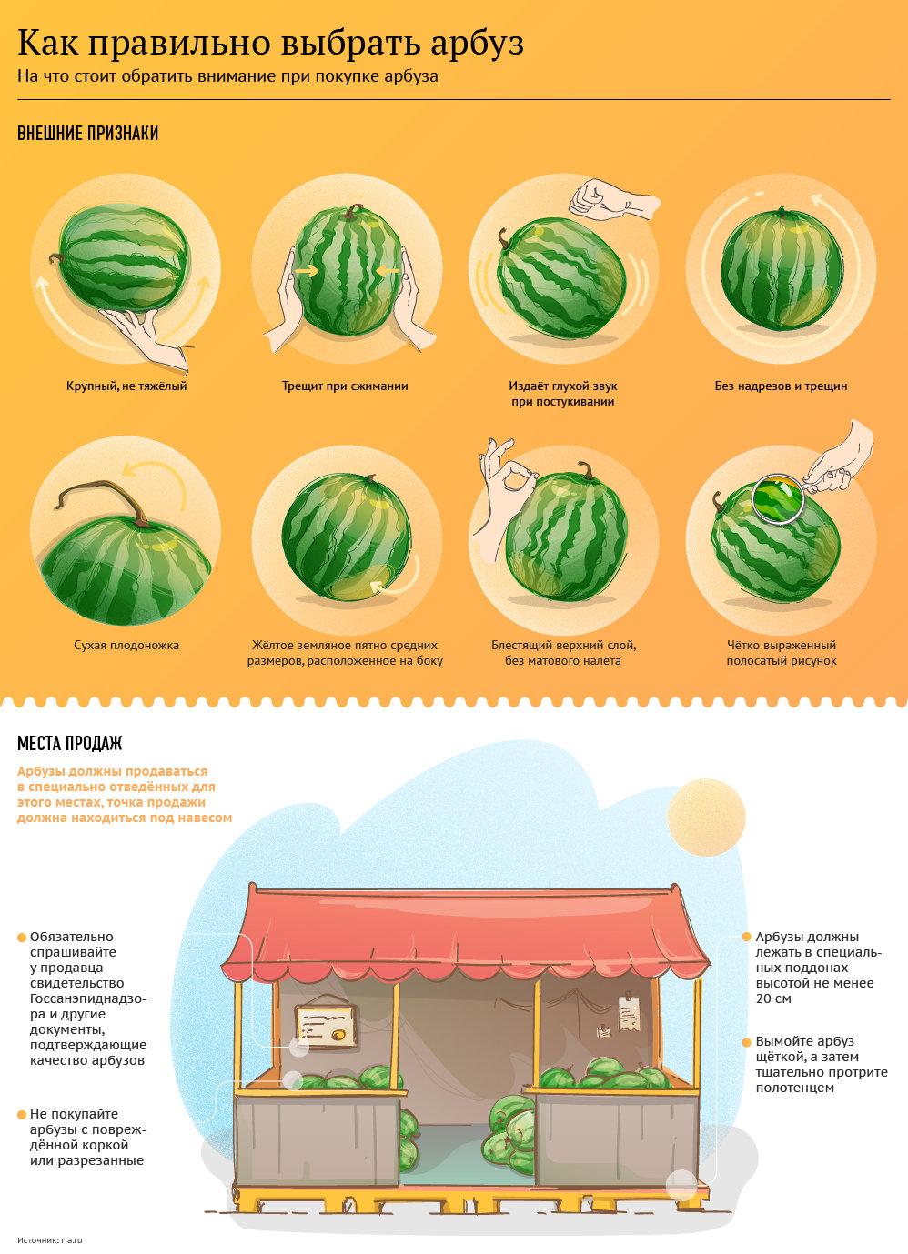 Инфографика. Как выбрать спелый и сочный арбуз