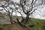 Гадрут. Нагорный Карабах, архивное фото