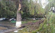 Сильный ветер в Ереване повалил деревья
