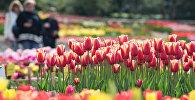 Ботанический сад. Архивное фото.