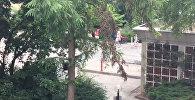 СПУТНИК_Первые кадры из Мюнхена, где произошла стрельба в торговом центре Олимпия