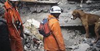 Горноспасатели из Швейцарии занимаются поиском людей в завалах