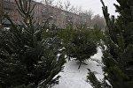 Продажа елей в Армении