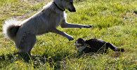 Кошка с собакой на улице
