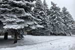 Зима в Армении, Ереван