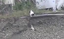 Кошка спасла щенка от неминуемой смерти