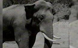Гибель сбежавшего из ереванского зоопарка слона Вовы