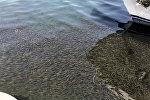 Рыба близ берега озера Севан