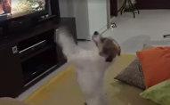 Собака требует продолжения песни Despacito