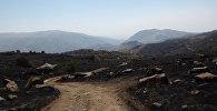 Пожар в Хосровском лесу.
