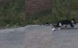 Очевидцы помогли кошке спасти котят и отнесли их в безопасное место