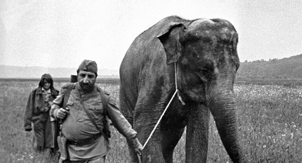 Ф. Мкртчян в фильме Солдат и слон