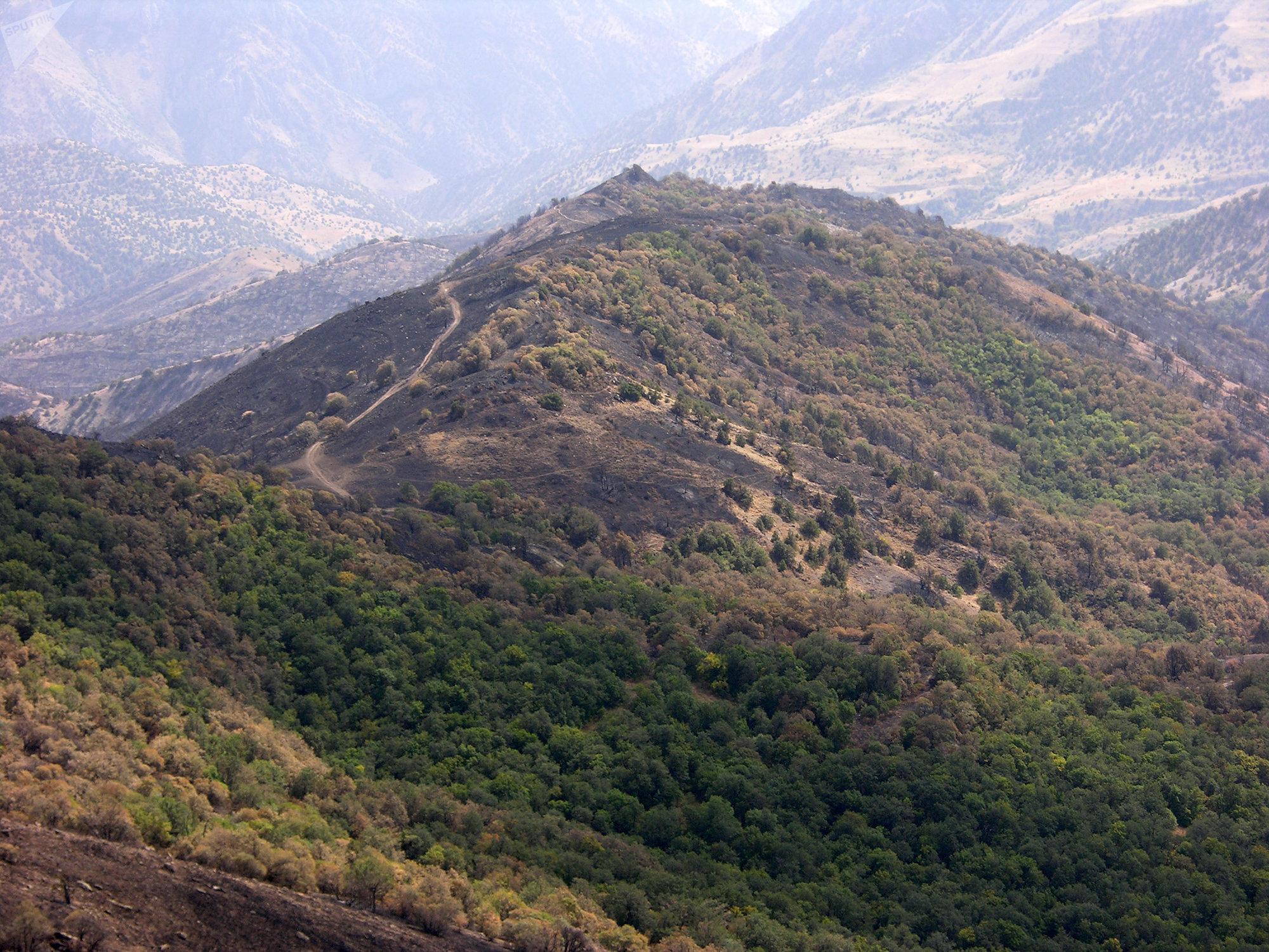 Хосровский лес после пожара
