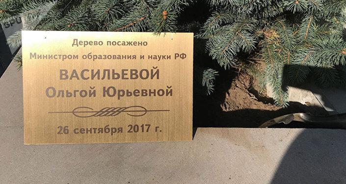 Дерево, посаженное Министром образования и науки РФ Ольгой Васильевой