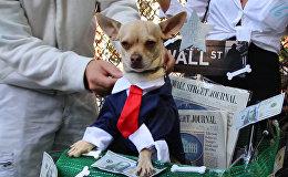 Собачий Хеллоуин в Нью-Йорке
