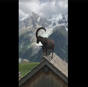 Туристы засняли неописуемую красоту Альп